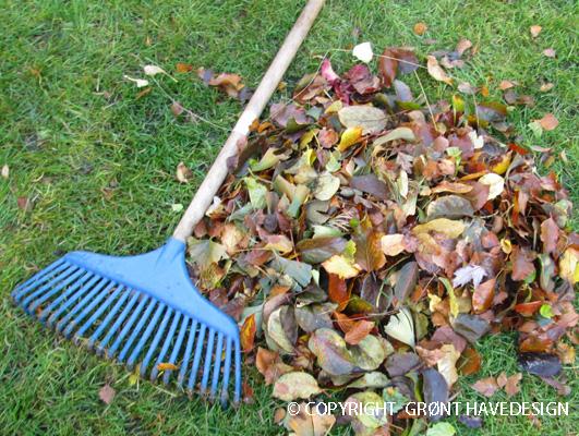 Havetips til november måneds gøremål i haven
