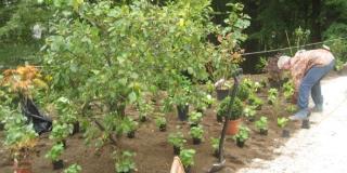 Plantning_Brejning (1)