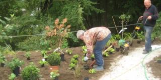 Plantning_Brejning (2)