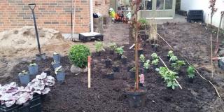 Plantning_Fredericia
