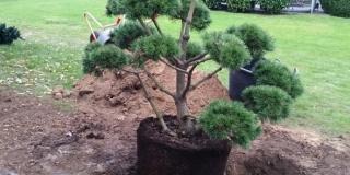 Plantning_Kolding