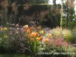 En spændende plantekombination med farver