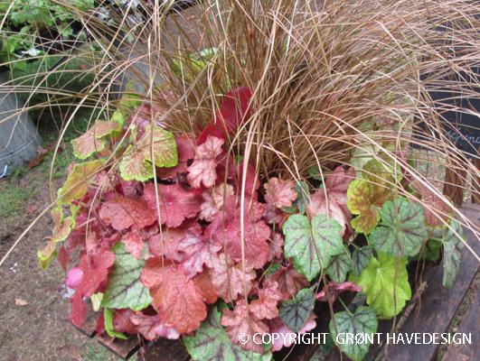 Forskellige bladoplevelser eksempelvis  prydgræs og Heuchera er oplagte netop nu i september-oktober
