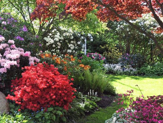 Rhododendronfamilien er stor og spændende at dyrke.