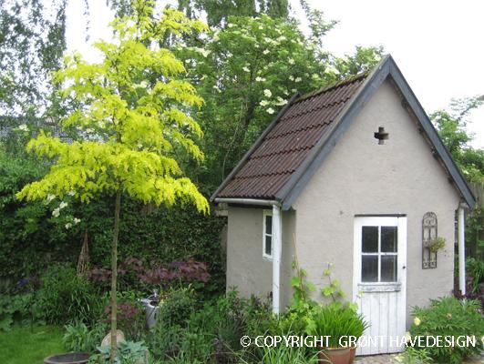 Tretorn er prydtræ som kan give en let behagelig skygge i haven