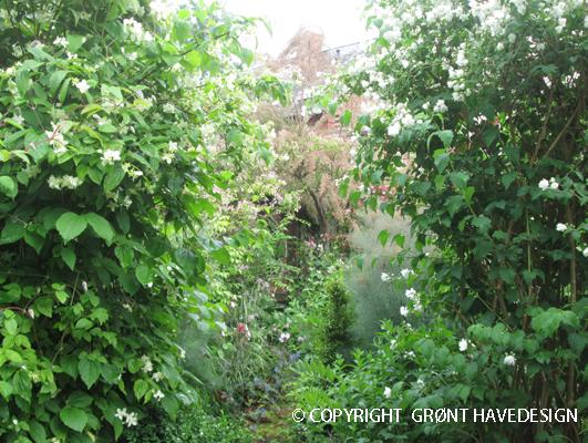 Den hemmelige havegang gennem de to duftende jasminer