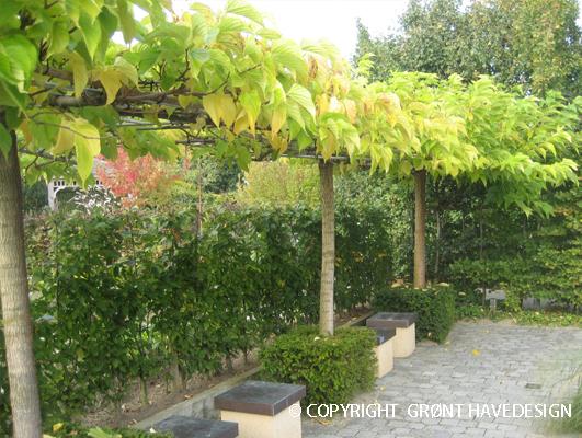 Her er brugt morbærtræ til at danne tag ved siddeplads