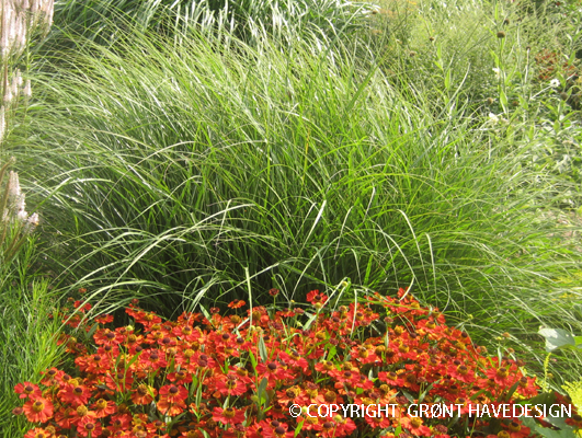 Orange og gule blomsterfarver signalere spænding og styrke