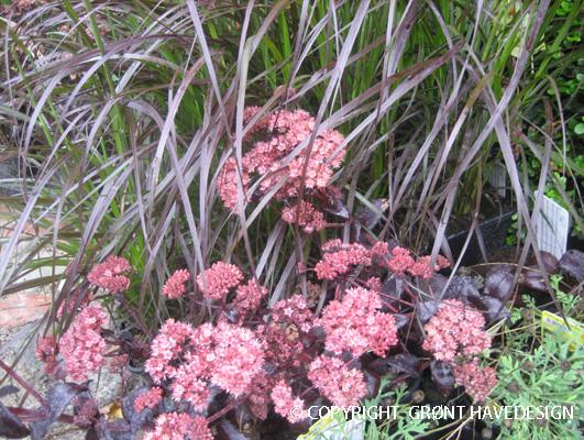farverige_planteoplevelser
