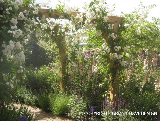 Rosenbue med klatrerose